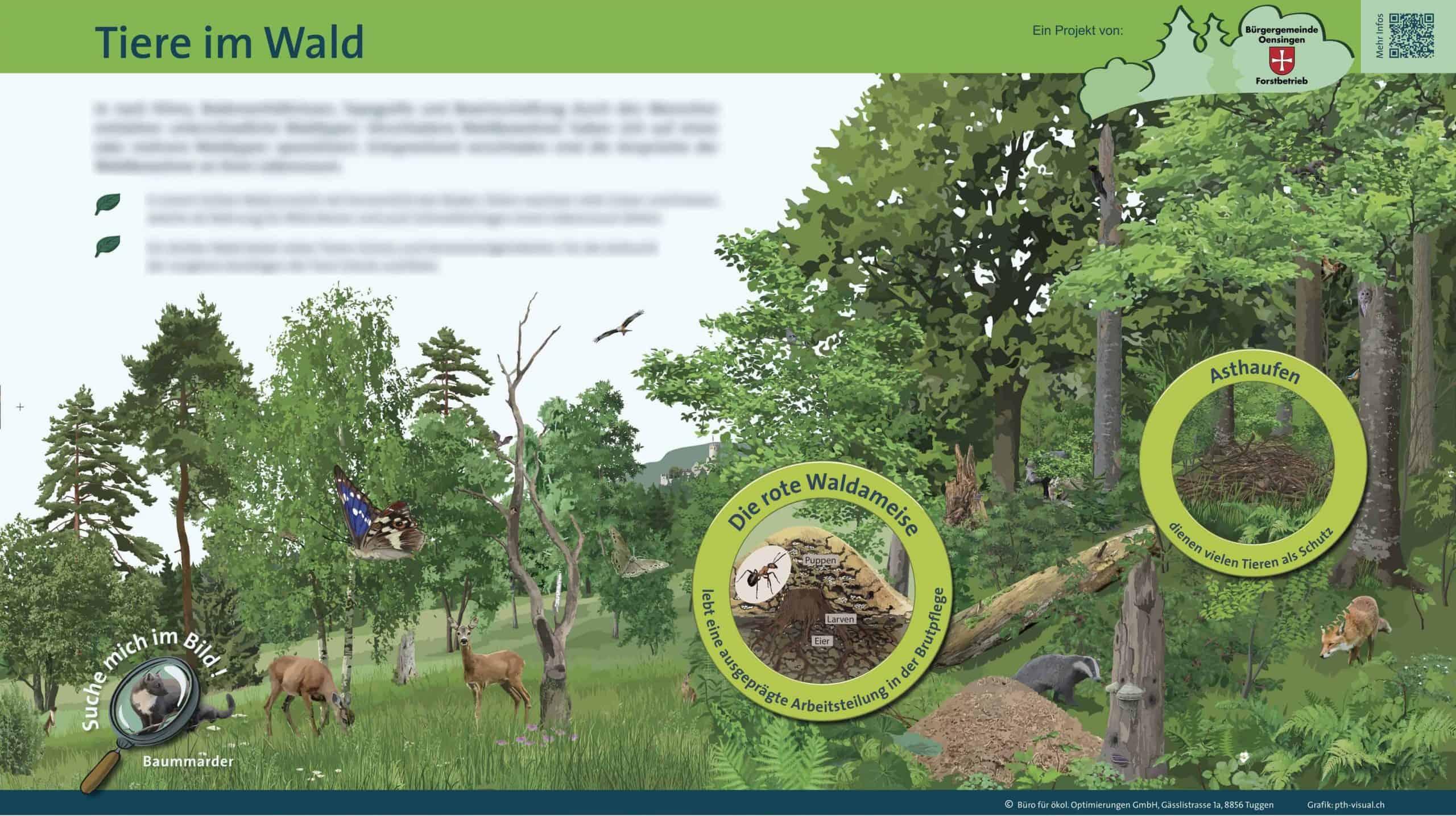 Waldlehrpfad Önsingen 5