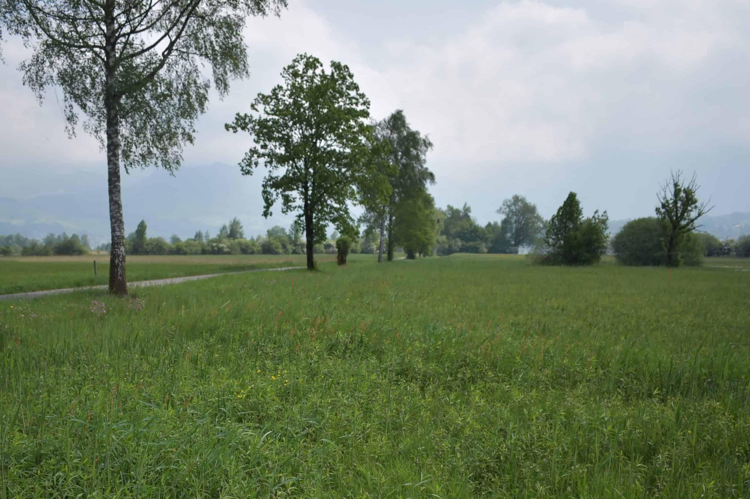 Neophytenbekämpfung Kaltbrunner Riet 16