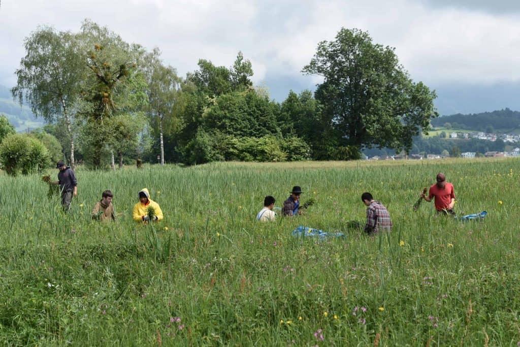 Stiftung Lebensraum Linthebene: Zivildienst im Naturschutz 14