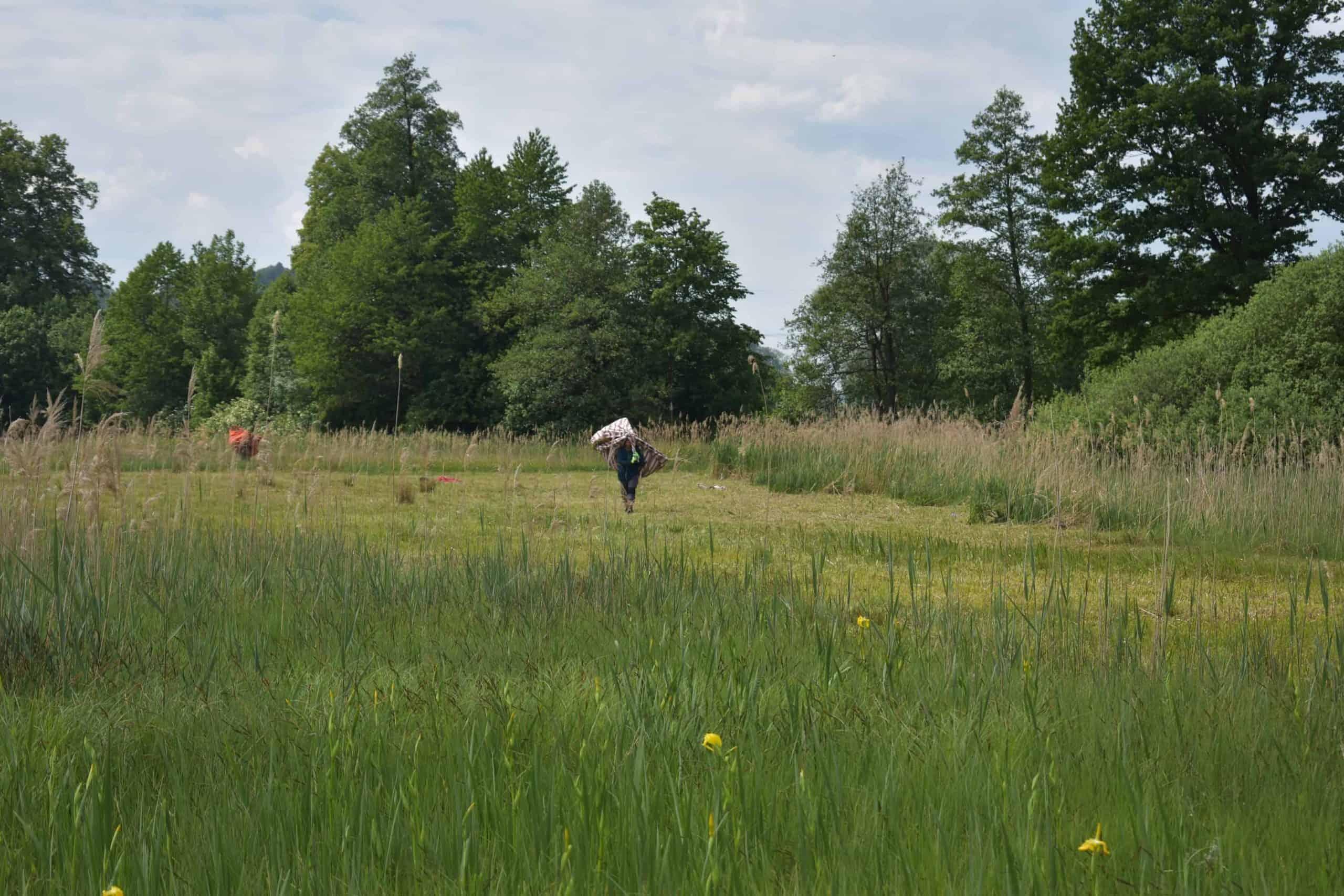 Neophytenbekämpfung Kaltbrunner Riet 17