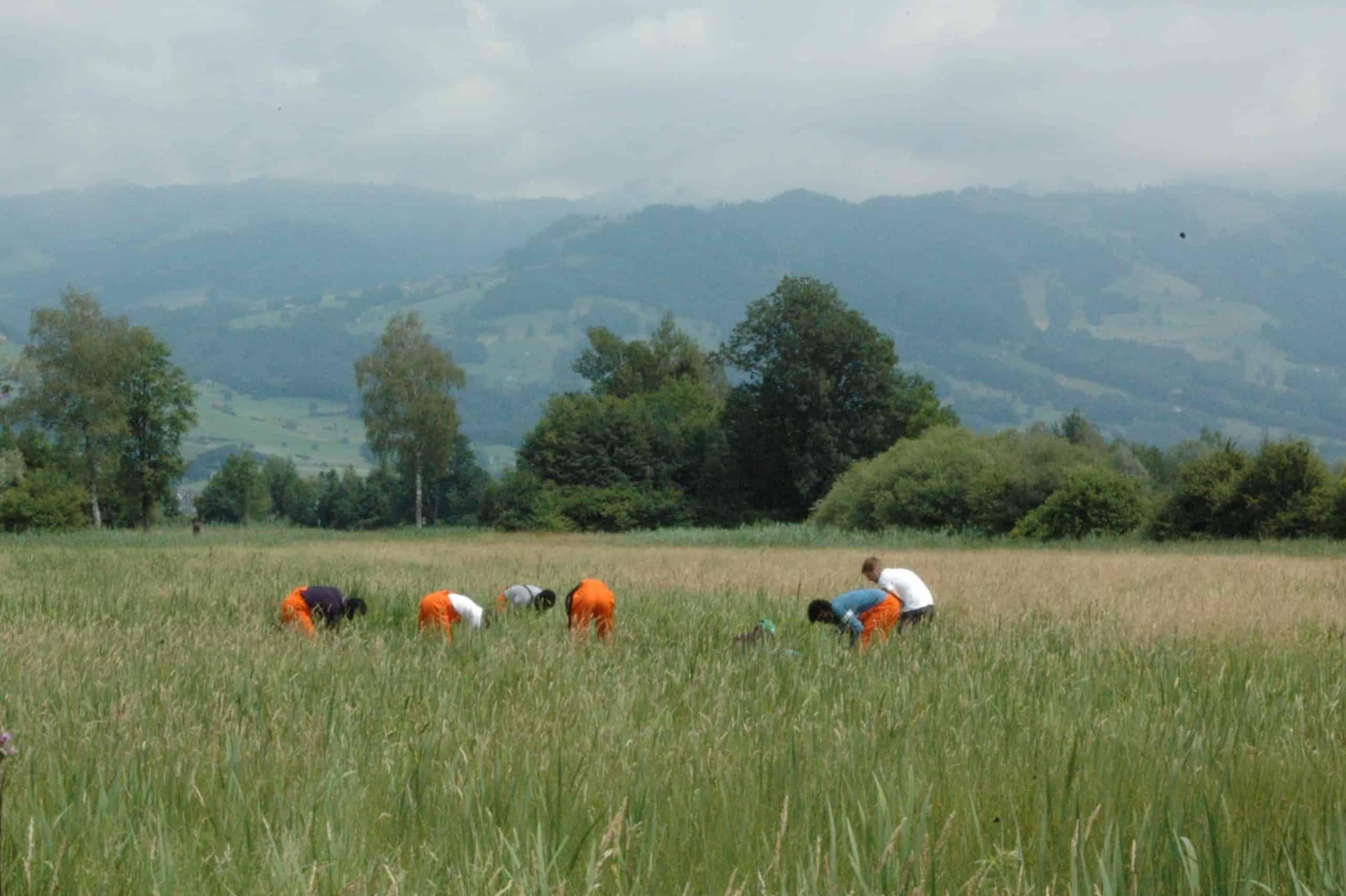 Neophytenbekämpfung Kaltbrunner Riet 3