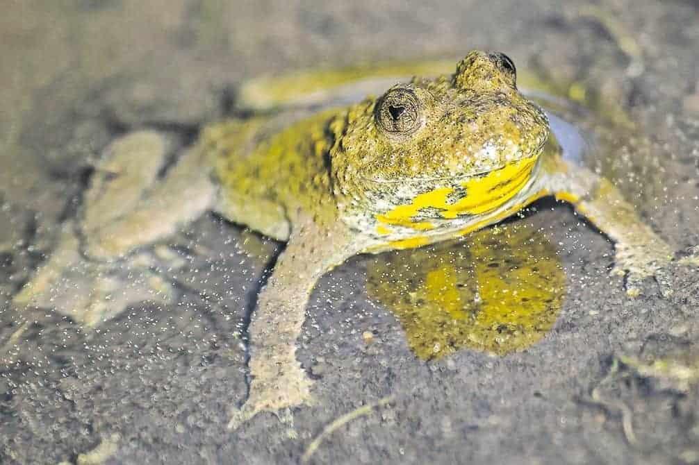 Ökologische Aufwertung Amphibienlaichgebiet Dreiwässern 3