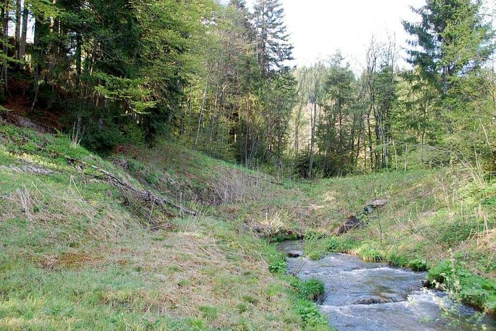 Ökologische Aufwertung Amphibienlaichgebiet Dreiwässern 9