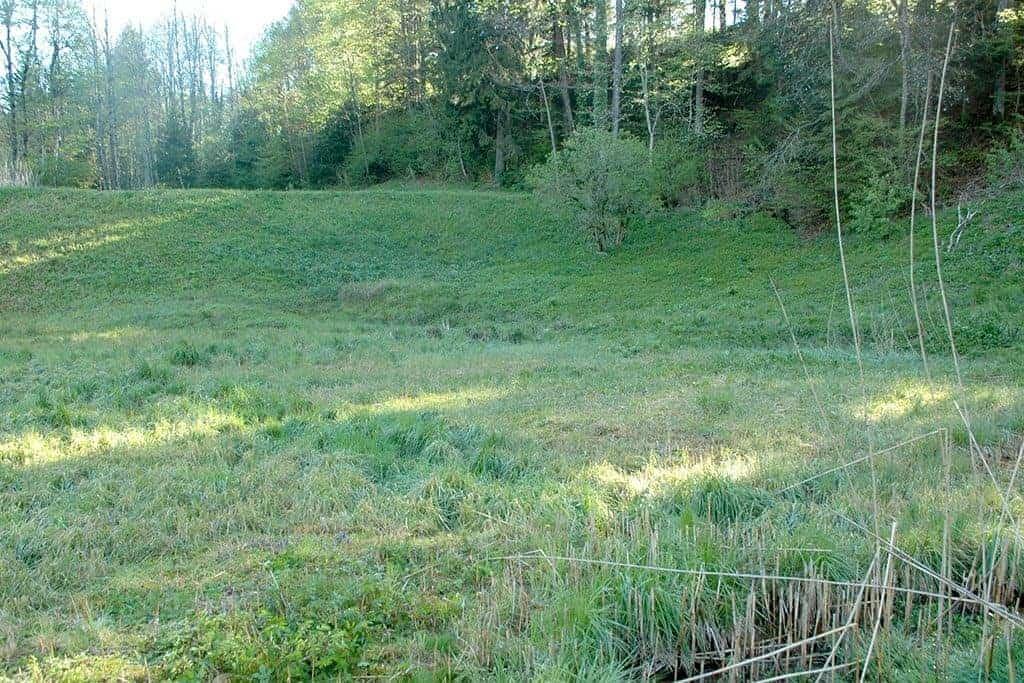 Ökologische Aufwertung Amphibienlaichgebiet Dreiwässern 7