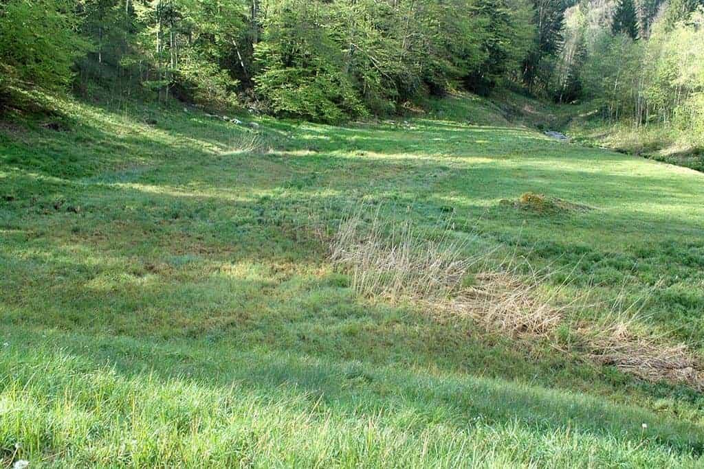 Ökologische Aufwertung Amphibienlaichgebiet Dreiwässern 5