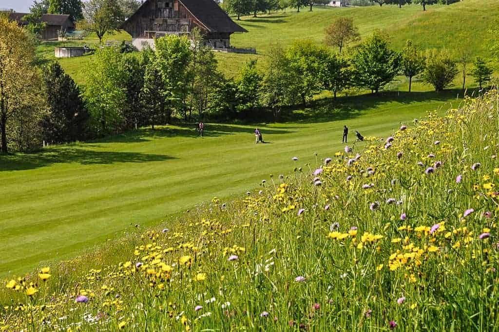 Ökologische Begleitung Golfplatz Küssnacht 3