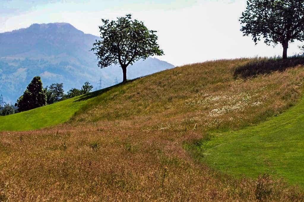 Ökologische Begleitung Golfplatz Küssnacht 10