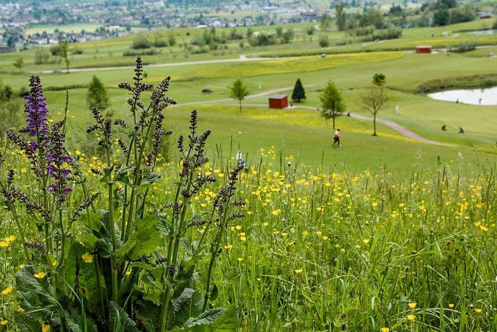 Ökologische Begleitung Golfpark Zürichsee 9