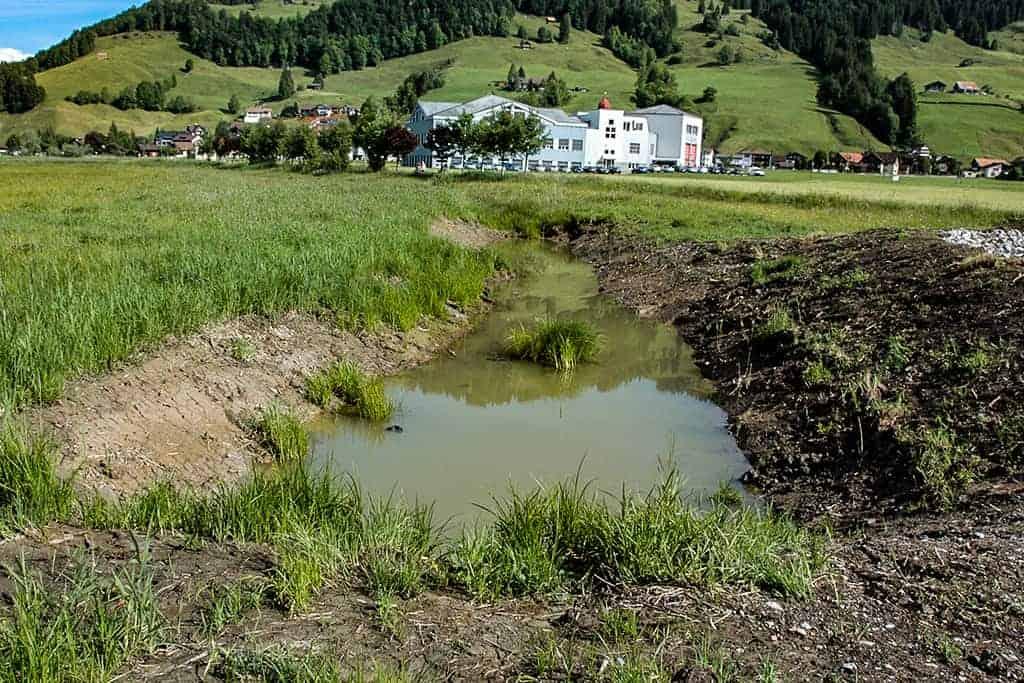 Revitalisierung Schweigbach und Amphibienbiotop Euthal 4