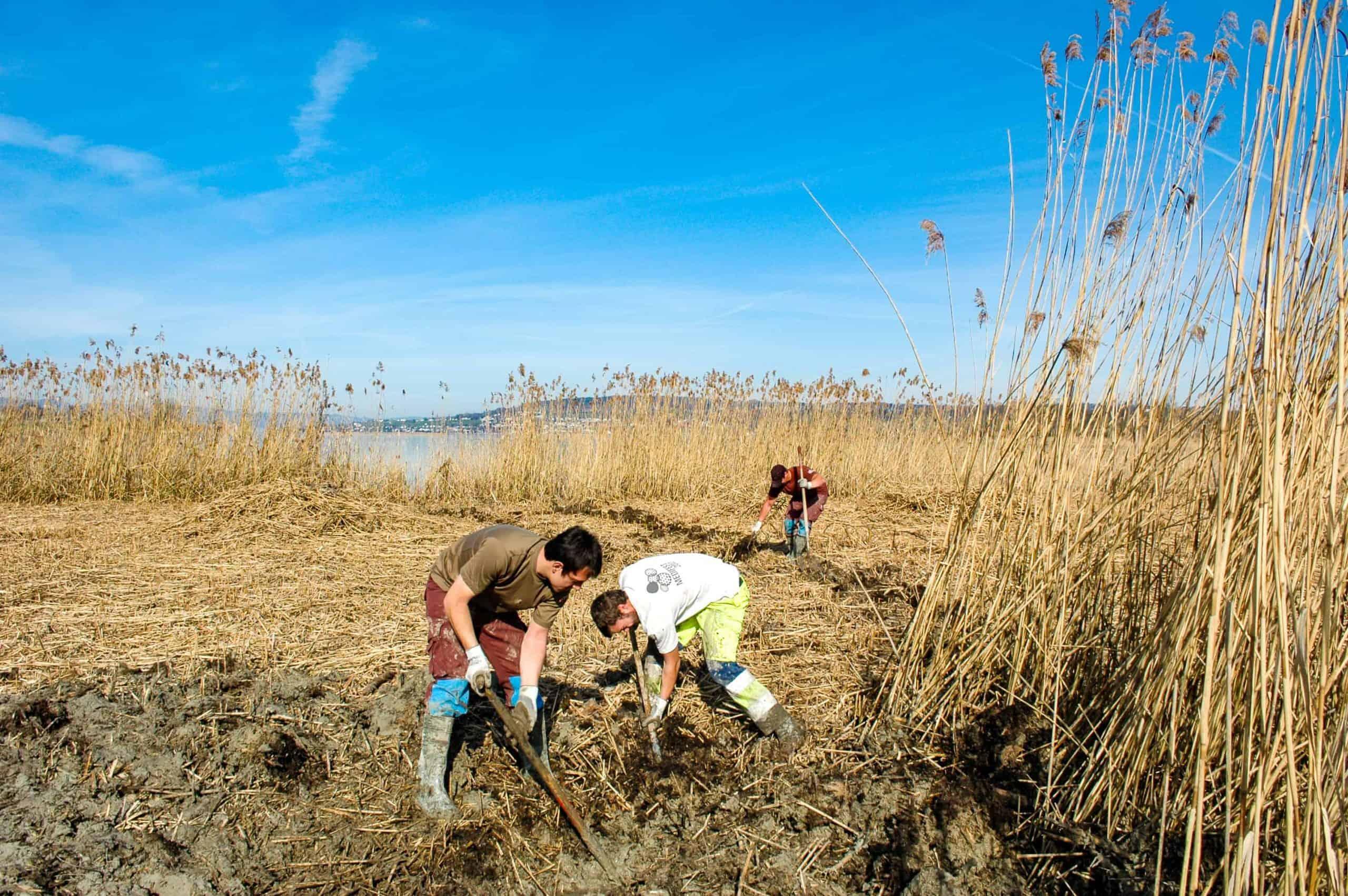 Stiftung Lebensraum Linthebene: Zivildienst im Naturschutz 7