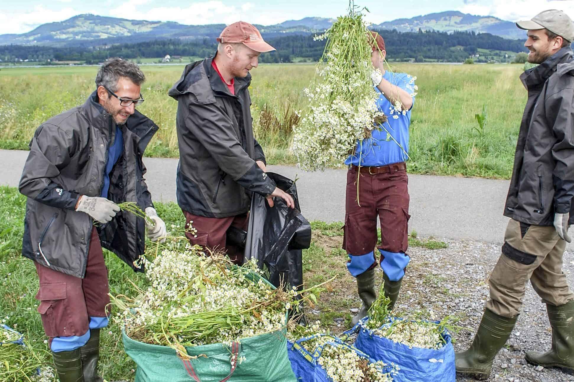 Stiftung Lebensraum Linthebene: Zivildienst im Naturschutz 8