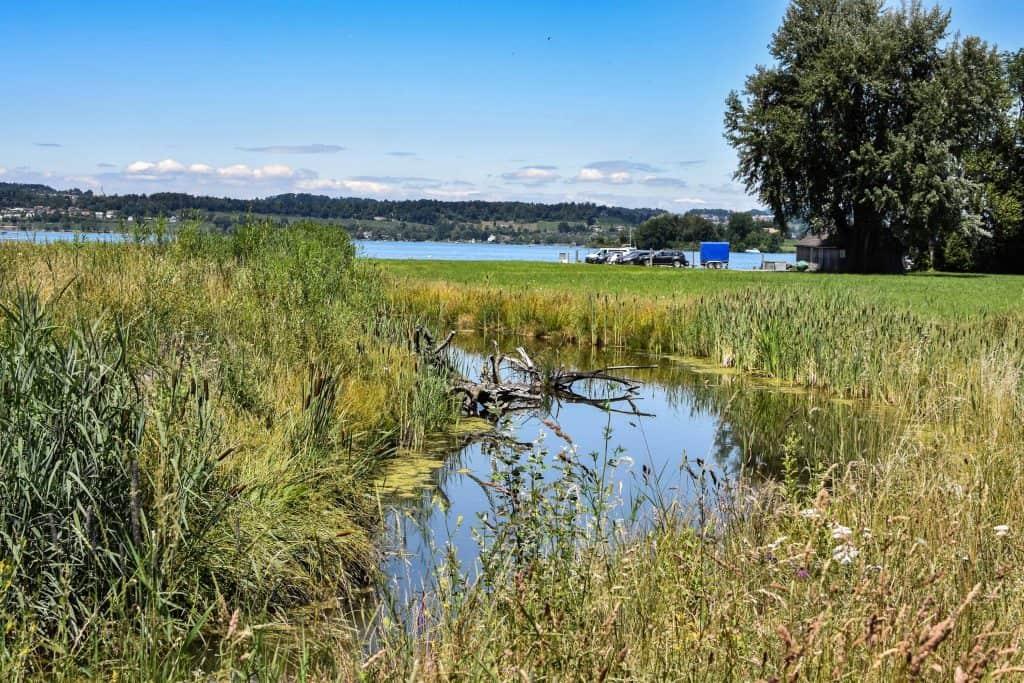 Revitalisierungen & Hochwasserschutz 4