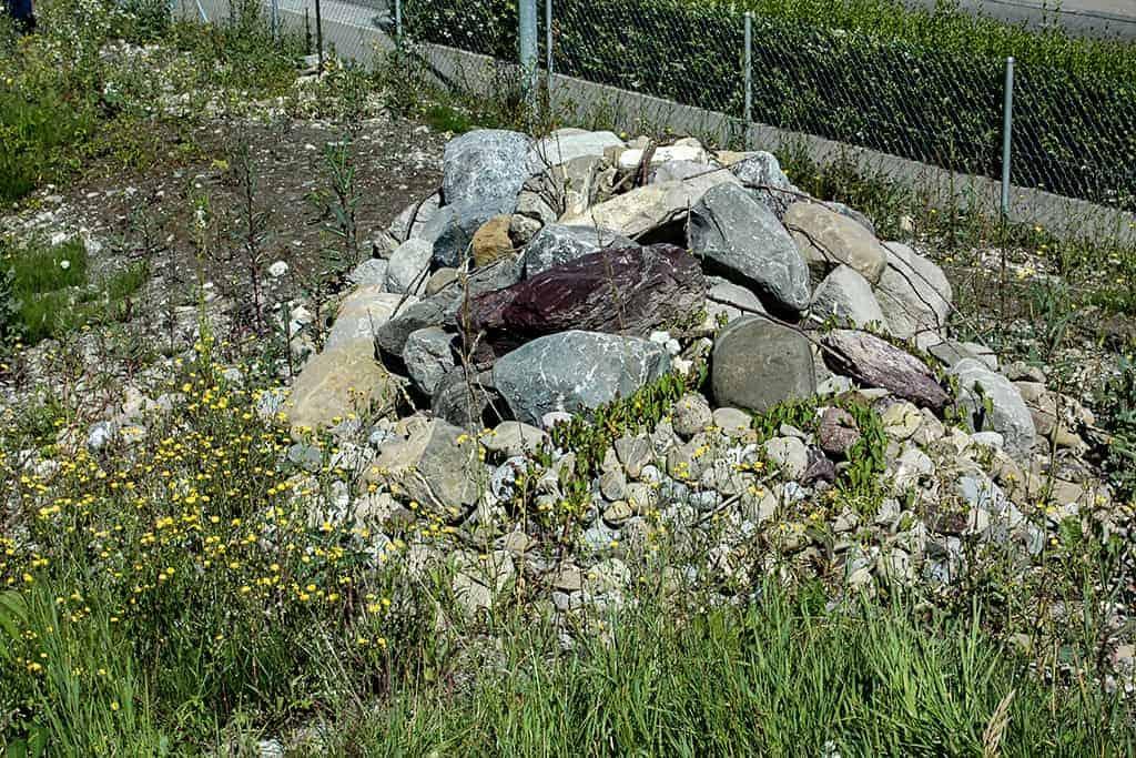 Ökologische Aufwertung Wygartenweiher Wollerau 8