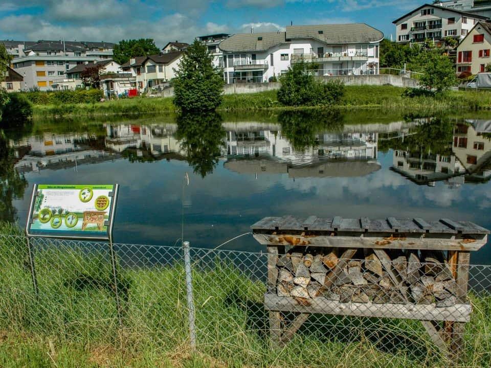 Ökologische Aufwertung Wygartenweiher Wollerau 14