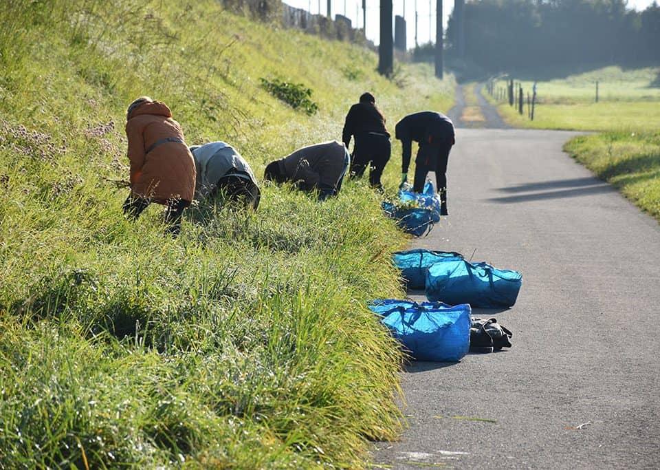 Helfer bekämpfen Neophyten entlang des Bahndamms