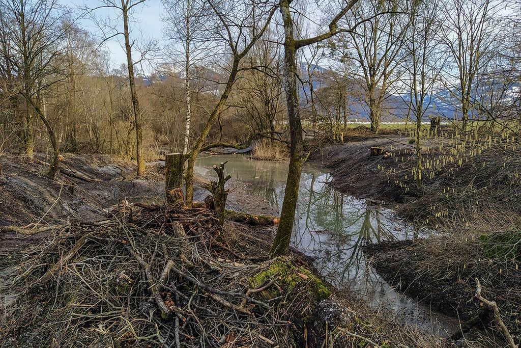 Ökologische Aufwertung Amphibienlaichgebiet Reumeren 7