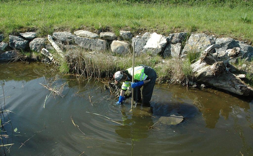 Makrozoobenthos Kicksampling am Riethofbach