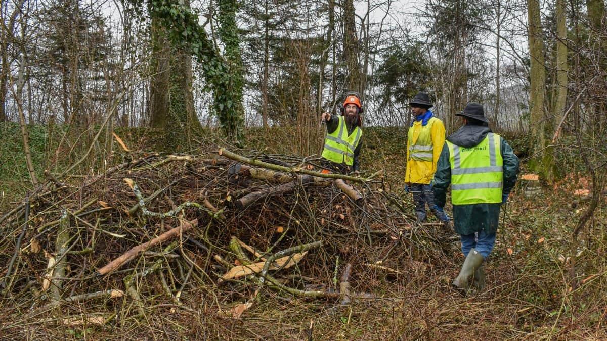 Mitarbeiter erstellen Holzstrukturen für Zauneidechsen
