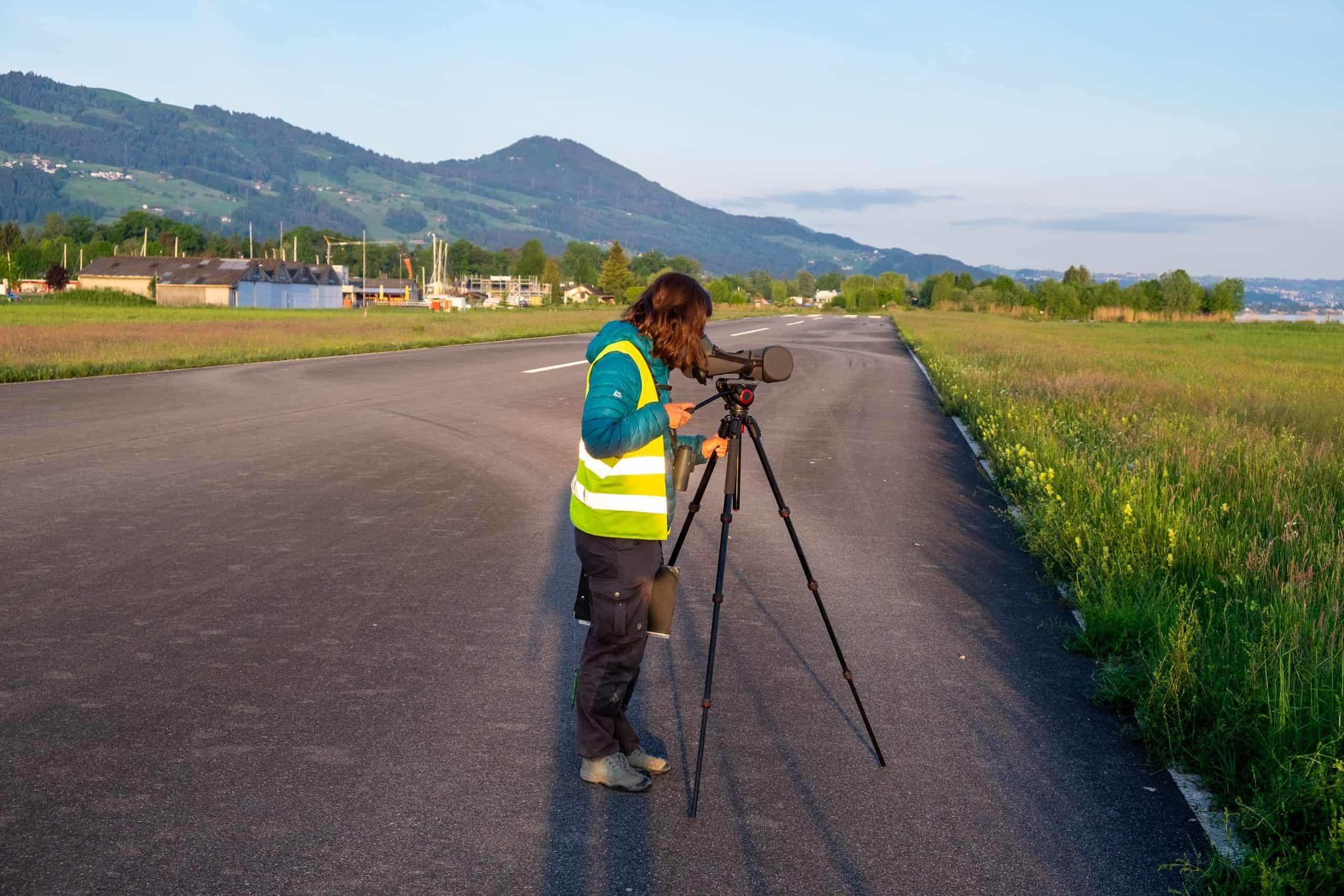 Person beobachtet Kiebitze im Gebiet
