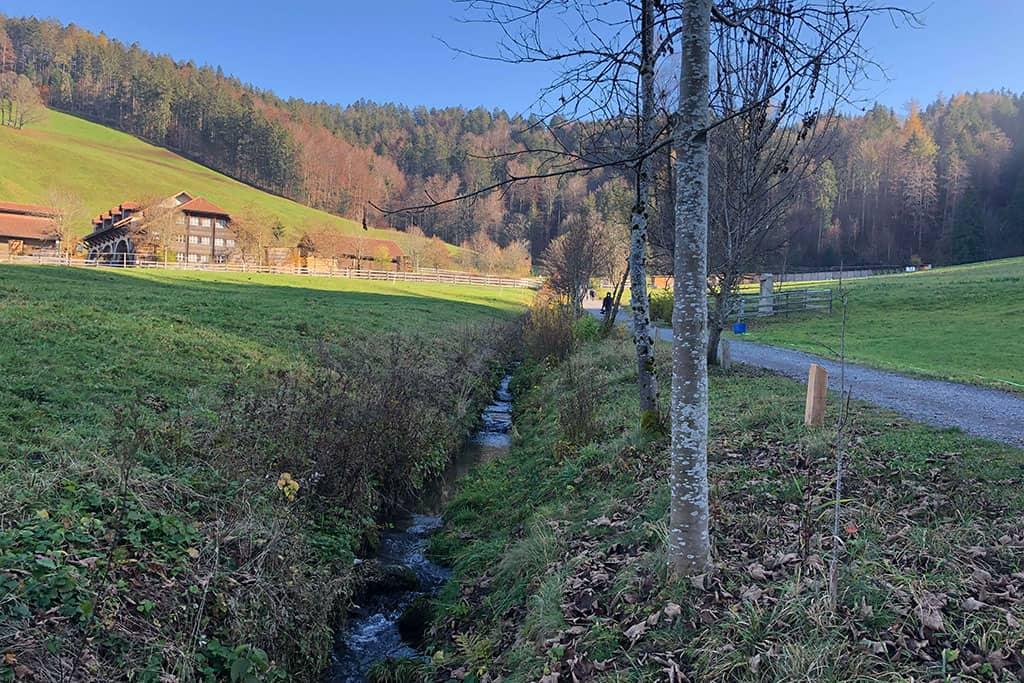 Revitalisierung Johannisbächli Einsiedeln 4