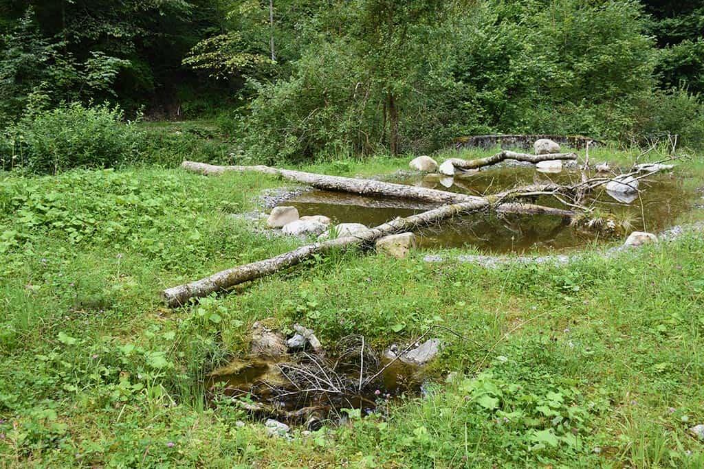 Amphibienlandschaft Chessibach 7