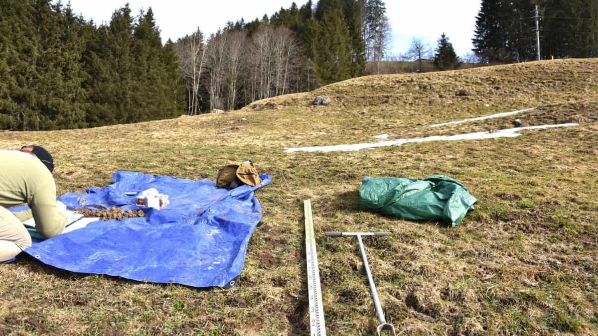 Deponie Stähliboden: Ökologie und Bodenschutz 2