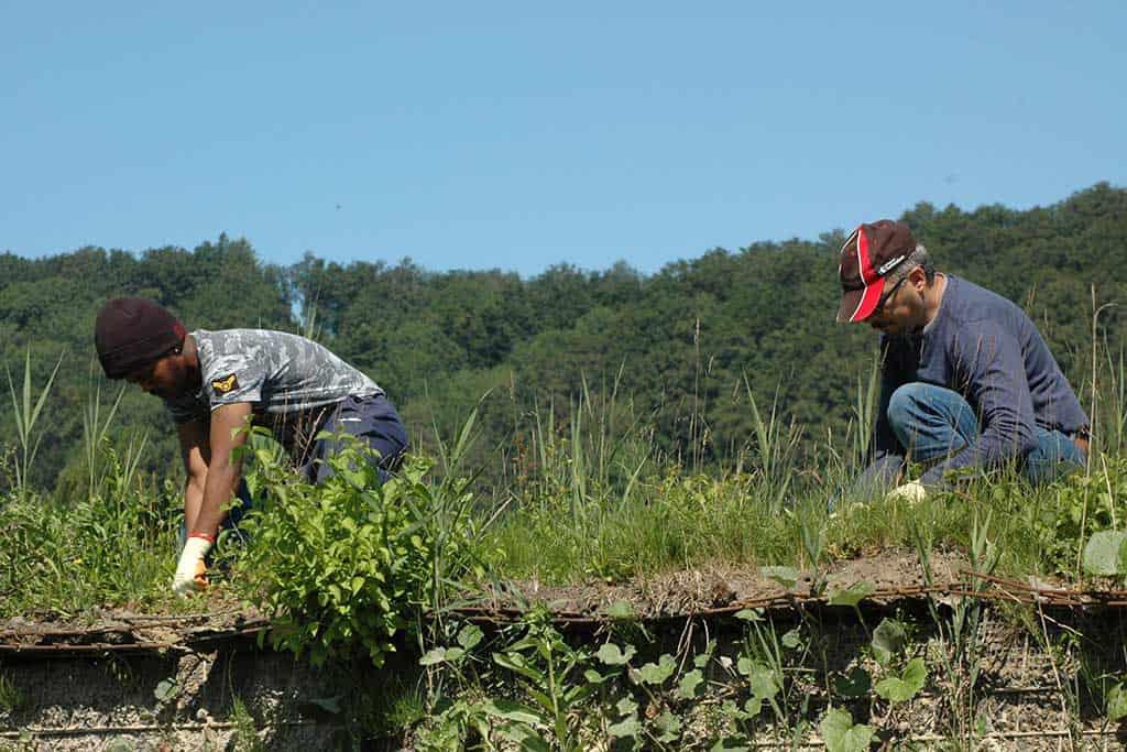 Neophytenbekämpfung Gemeinde Tuggen 3