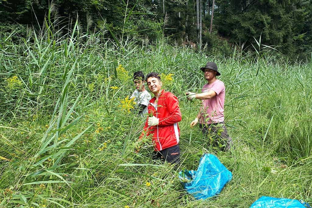 Neophytenbekämpfung Gemeinde Tuggen 4