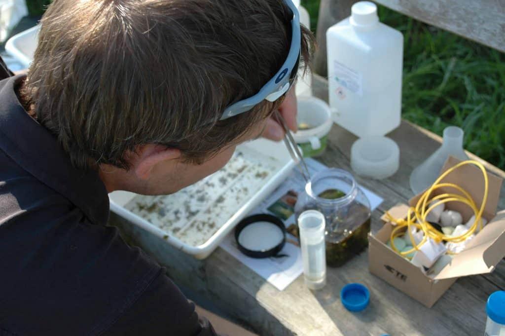 Makrozoobenthos untersuchen am Talbach